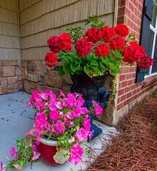 flowers, john bunn realty, leaves, mountains, vacation house, flowers, john bunn realty, ga