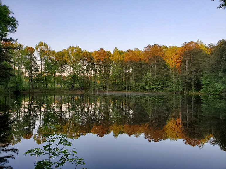 lakes, beauty, trees, john bunn realty, property, investment, 242 mountain hill rd, fortson ga