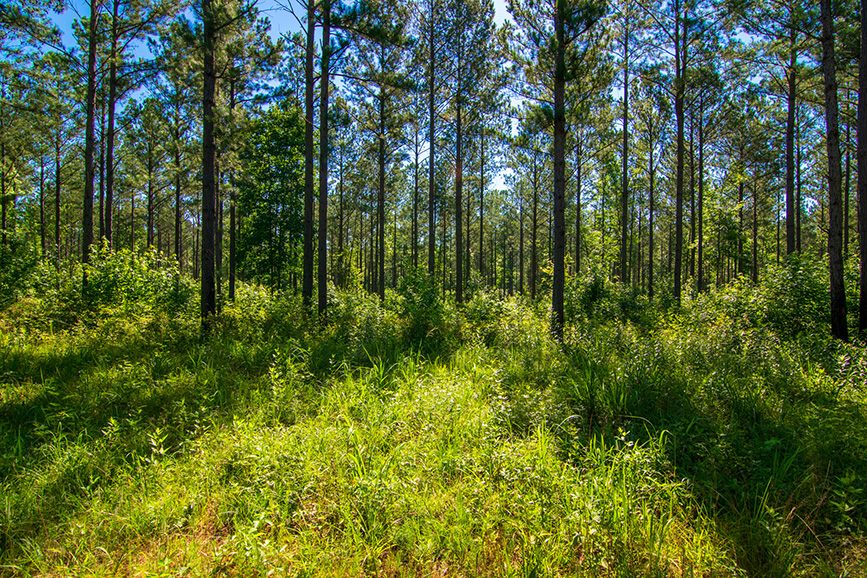 0 roosevelt hwy, greenville ga, nature, trees, john bunn realty, realtor