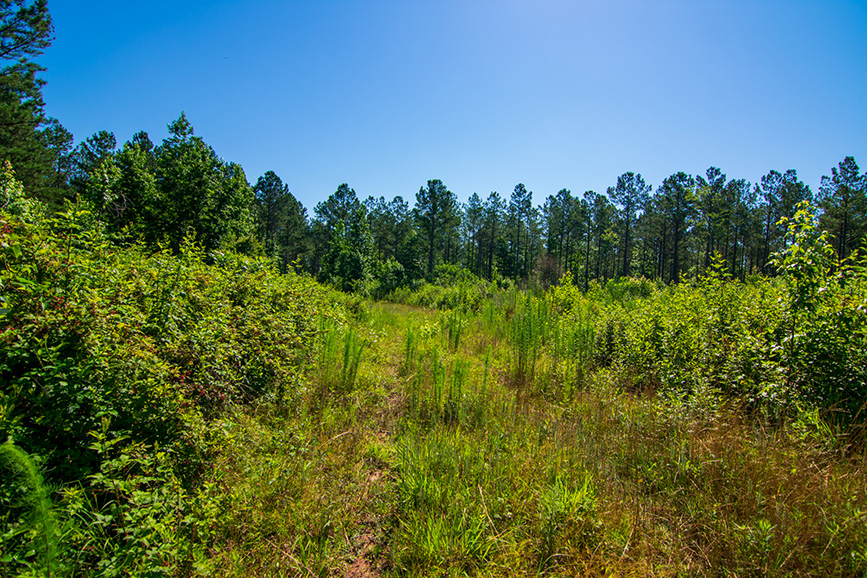 0 roosevelt HWY, greenville, ga, nature, john bunn realty, greenery