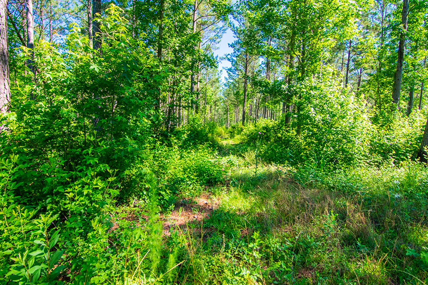 greenville ga, roosevelt, nature, land for sale, john bunn realty