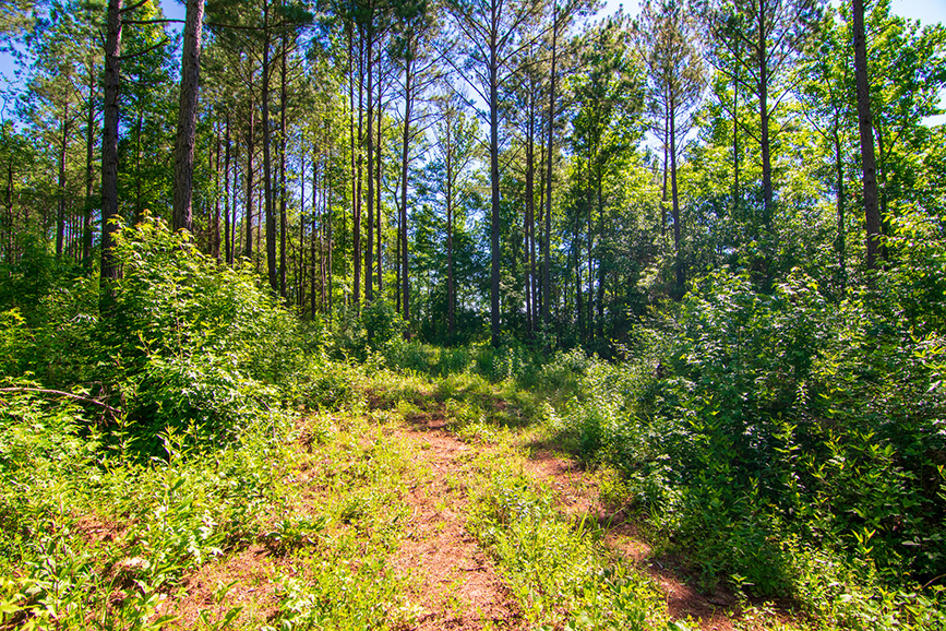 0 roosevelt hwy, nature, greenville ga, john bunn realty, land