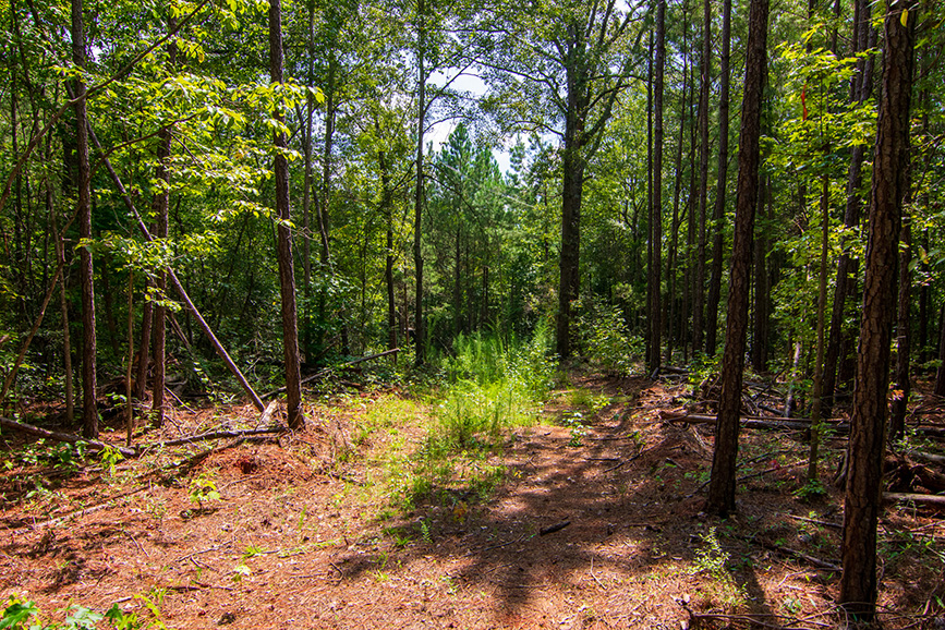 realtor realty for sale in pretty area woods trees john bunn realty harris county