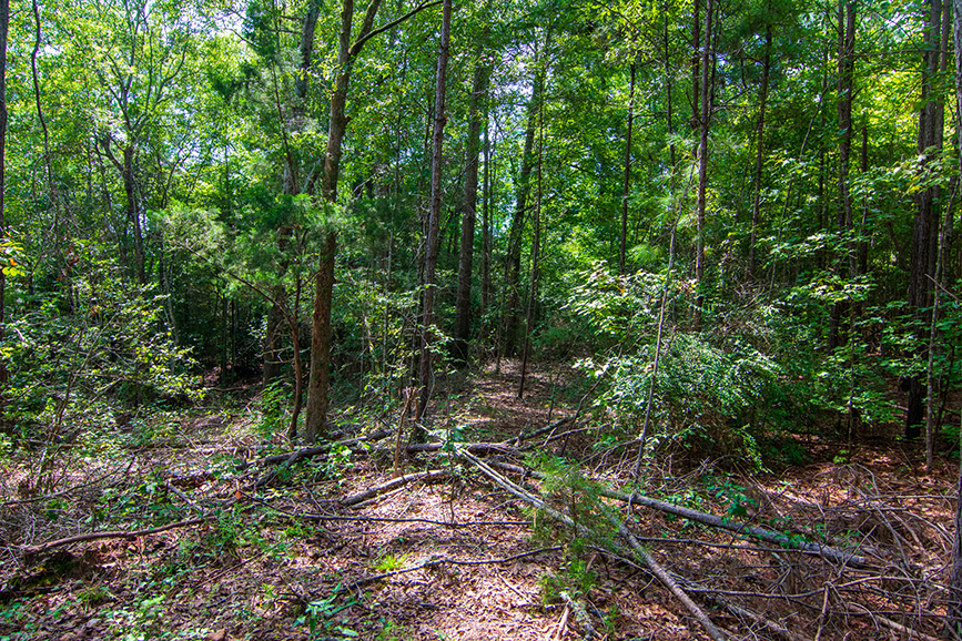 122 lower blue springs road, john bunn realty, realtor houses in the woods, forest houses, nature houses greenery, realty, homes for sale pretty area