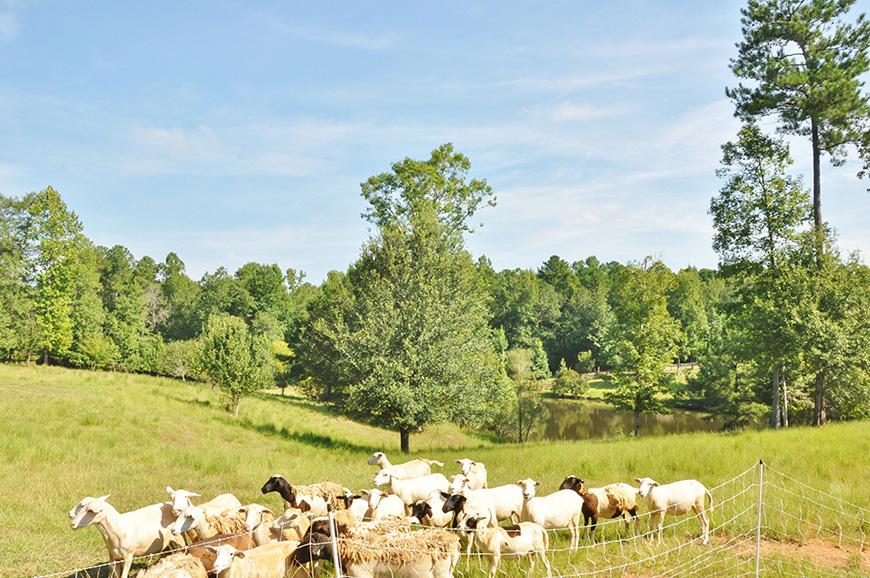 animals in pasture john bunn realty