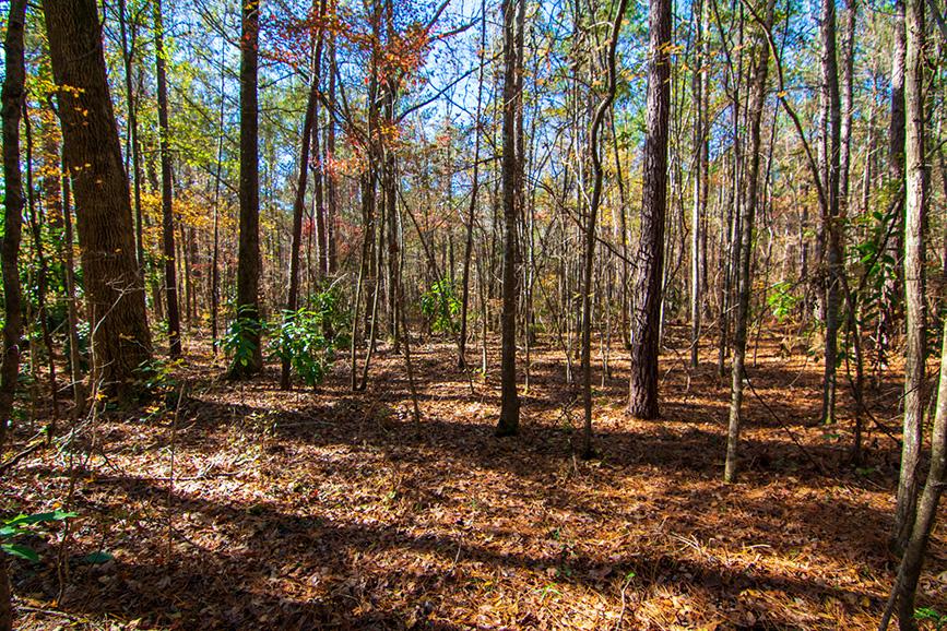 Harris County land for sale John Bunn Realty