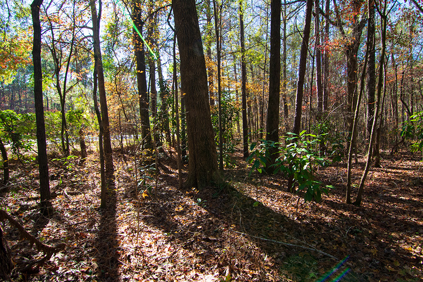 land for sale from John Bunn Realty