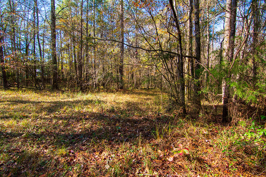 open wooded area land for sale john bunn realty