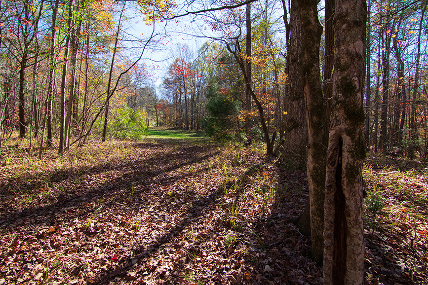 beautiful wooded area john bunn realty land for sale