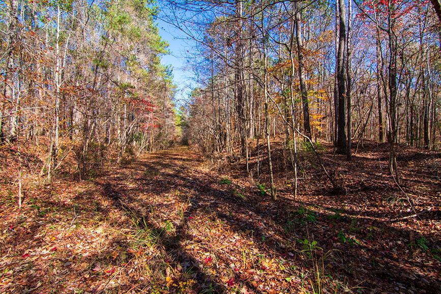 john bunn realty land for sale wooded area hamilton ga