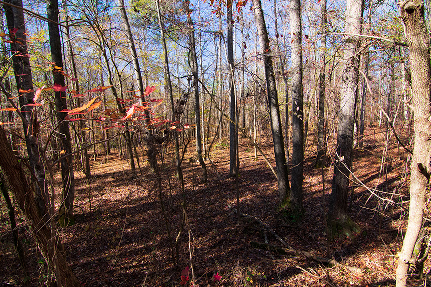 land for sale wooded area john bunn realty