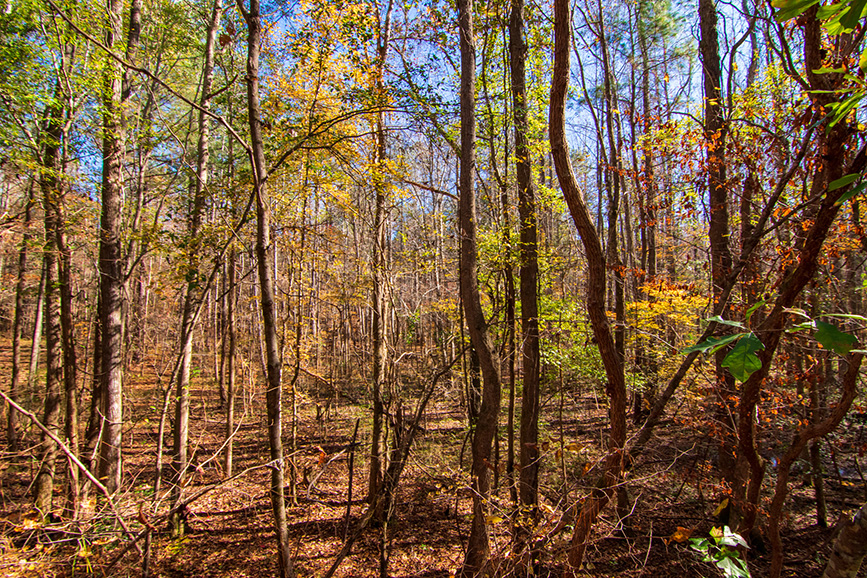 wooded area land for sale harris county ga, local realtors near me, harris co realtor, realty companies near me, harris county ga real estate, harris county realty