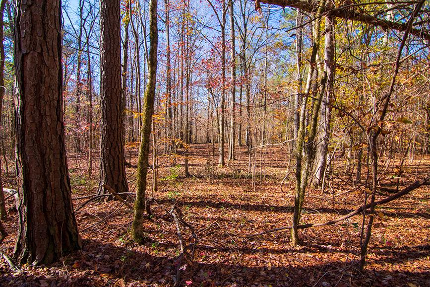 John Bunn Realty land for sale