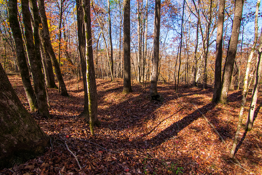 wooded land for sale harris county ga john bunn realty