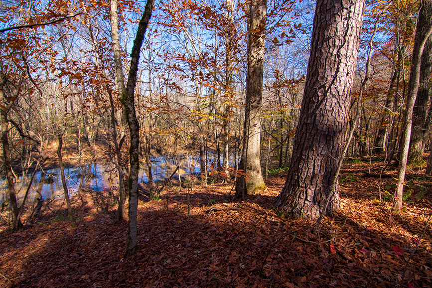 wooded area land for sale john bunn realty