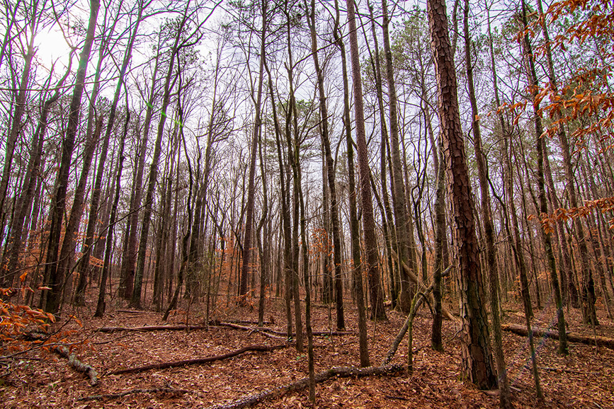 forest, outdoors, trees, leaves, john bunn realty