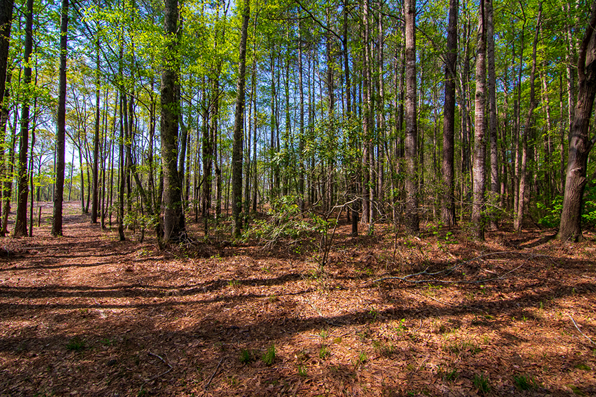 Forested area for sale with a trail, John Bunn Realty, 18420 GA Highway 116 Shiloh, Georgia, Columbus, Georgia, John Bunn, beautiful green property for sale