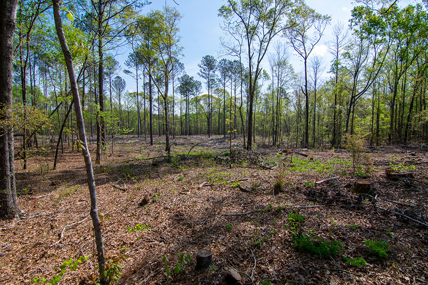 forested area, property for sale, 18420 GA Highway 116 Shiloh, GA, Columbus, Georgia, John Bunn Realty, nature, greenery, forested area
