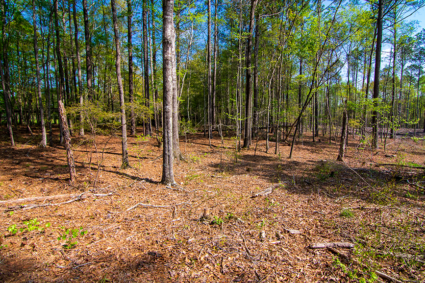 Forested land for sale, John Bunn Realty, 18420 GA Highway 116 Shiloh, Georgia, Columbus, Georgia, greenery, tree-covered, amazing nature