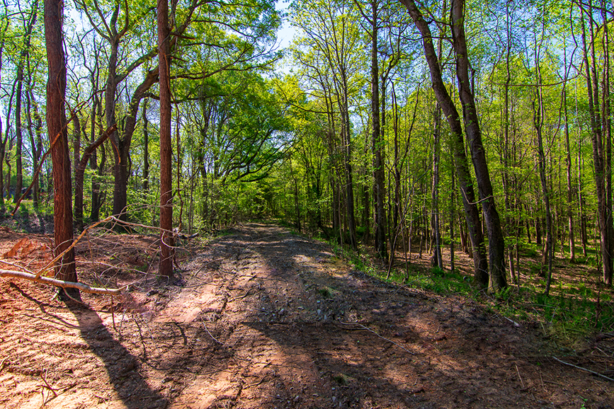 0 Highway 85 Waverly Hall, GA, Columbus, Georgia with John Bunn Realty, forested property for sale, trail, John Bunn, tree-covered, greenery, trees surrounding a trail, property for sale