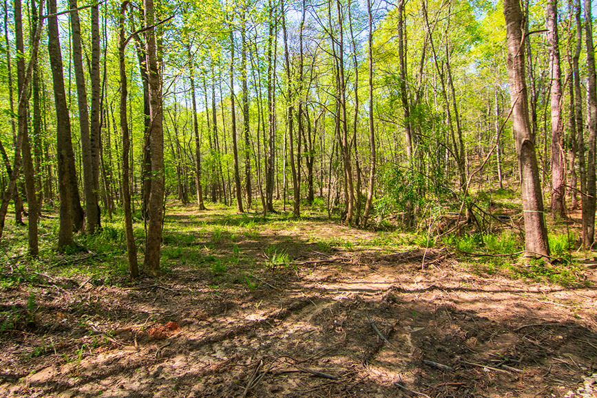 0 Highway 85 Waverly Hall, GA, Columbus, Georgia, John Bunn Realty, Property for sale, forested area, tree-covered, John Bunn, amazing greenery