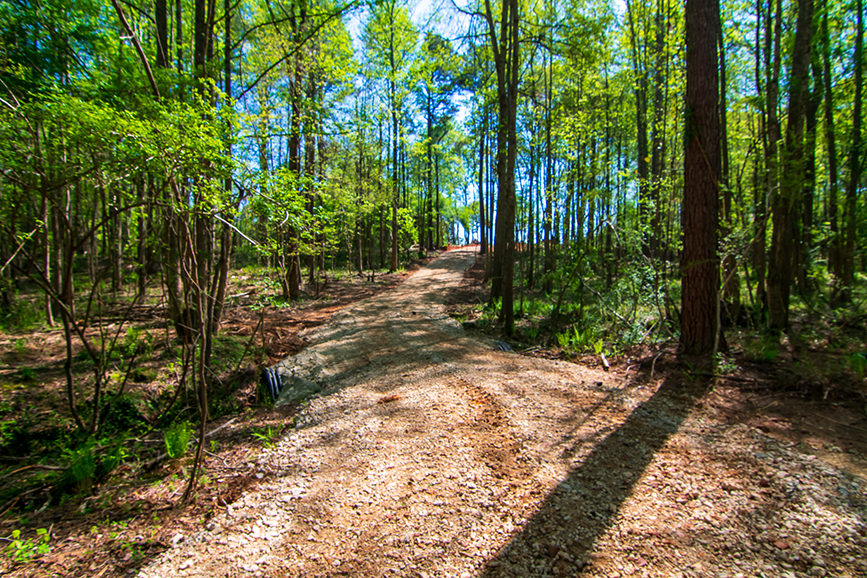 Beautiful forested area with a trail for sale with John Bunn Realty in Columbus, Georgia, 0 Highway 85 Waverly Hall, GA, property for sale, forested property, trail, amazing greenery, property for sale