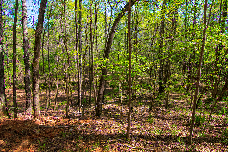 Beautiful green forested area for sale in Columbus, Georgia, 0 Highway 85 Waverly Hall, GA with John Bunn Realty, amazing forested property, property for sale, John Bunn