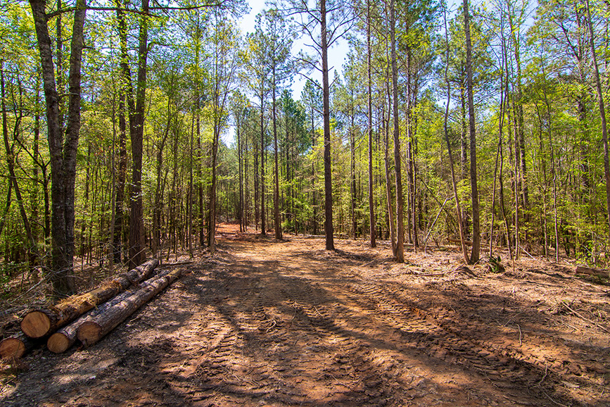 Beautiful tree-covered property for sale with John Bunn Realty in Columbus, Georgia, 0 Highway 85 Waverly Hall, GA, forested area, property for sale, John Bunn