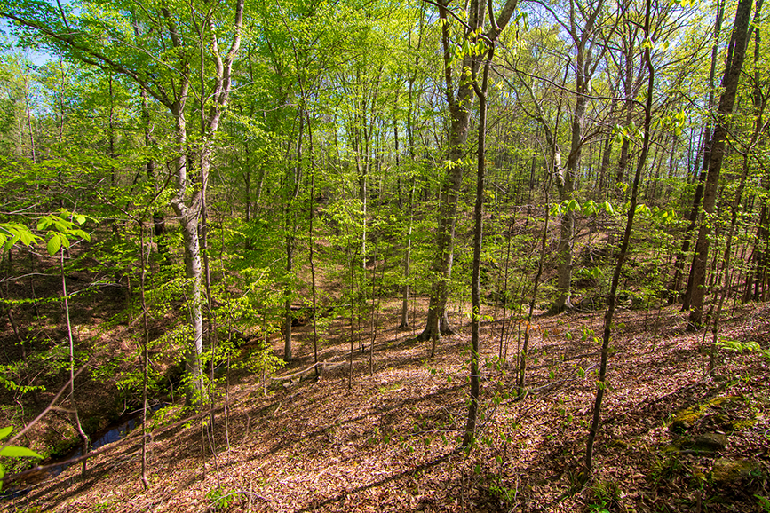 John Bunn Realty, 0 Highway 85 Waverly Hall, GA, Columbus, Georgia, property for sale, forested area, forested property for sale, amazing greenery