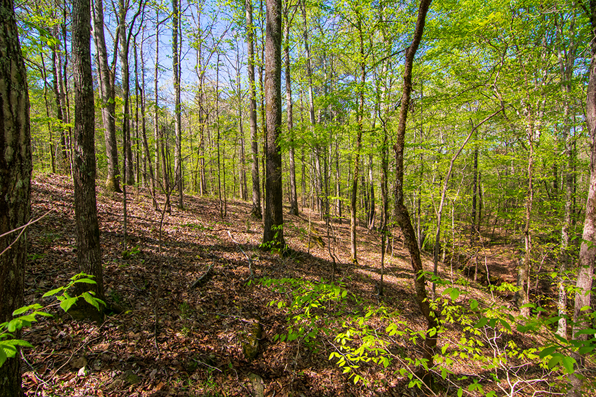 Property for sale in Columbus, Georgia, 0 Highway 85 Waverly Hall, GA with John Bunn Realty, forested area, tree-covered, beautiful property