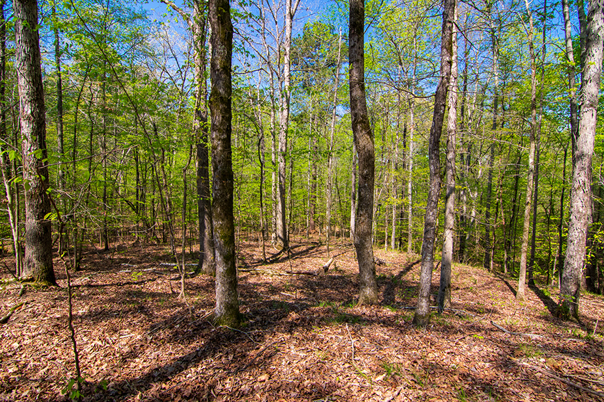 John Bunn realty, forested area, property for sale, forested property for sale, 0 Highway 85 Waverly Hall, Columbus, Georgia, John Bunn
