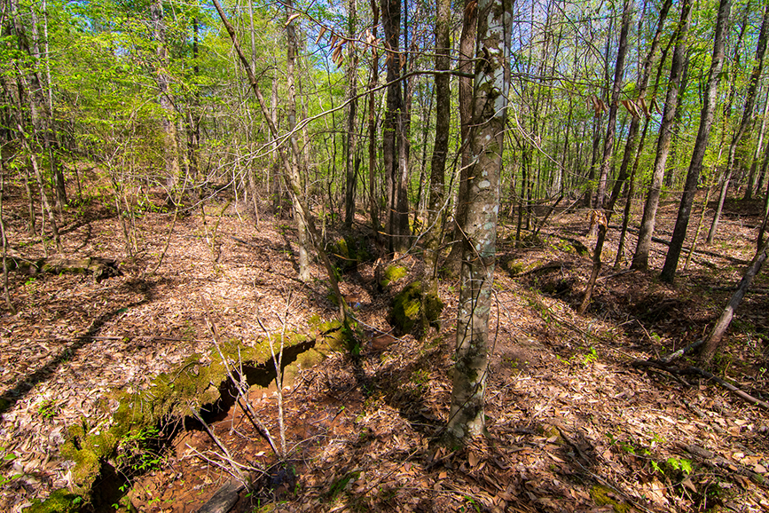Forested property for sale, John Bunn Realty, 0 Highway 85 Waverly Hall, GA, Columbus, Goergia, Property for sale, Forested area, beautiful greenery