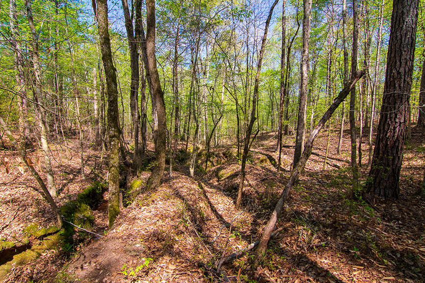 0 Highway 85 Waverly Hall, GA, Columbus, Georgia, Forested property for sale, property for sale, John Bunn Realty, forested greenery