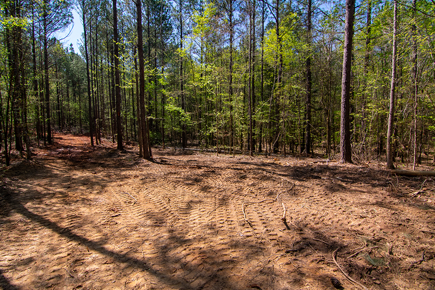 Beautiful forested property for sale with John Bunn Realty, 0 Highway 85 Waverly Hall, GA, Columbus, Georgia, property for sale, forested area