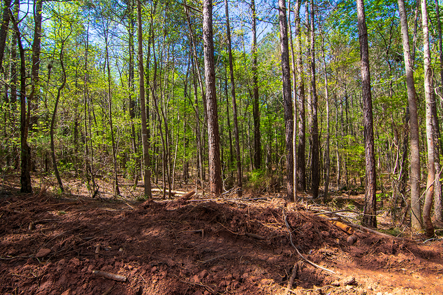 Amazing green forested property for sale, 0 Highway 85 Waverly Hall, GA, Columbus, Georgia, property for sale with John Bunn Realty, forested area