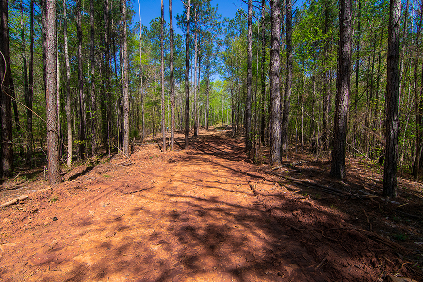 0 Highway 85 Waverly Hall, GA, Columbus, Georgia, forested property for sale, John Bunn Realty, property for sale, forested property with a trail for sale