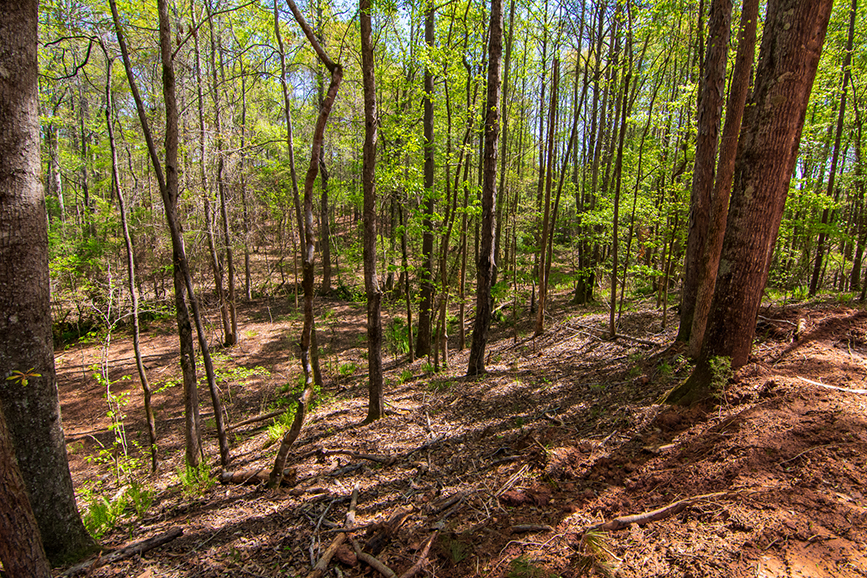 0 Highway 85 Waverly Hall, GA, Columbus, Georgia, forested property for sale, John Bunn Realty, property for sale
